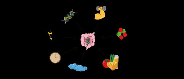 Darstellung Darmgesundheit und Darmbakterien - was beeinflusst das Mikrobiom? Beispiele sind Gene, Stress, Sport, Medikamente, Ernährung, Umwelt und Alter