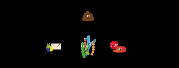Einfluss Fermentationsbakterien Körper Verdauung, Pathogenabwehr Vitamine Botenstoffe